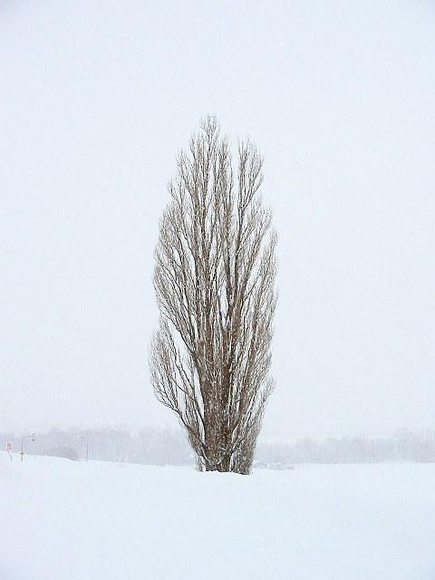 Biei_winter_04