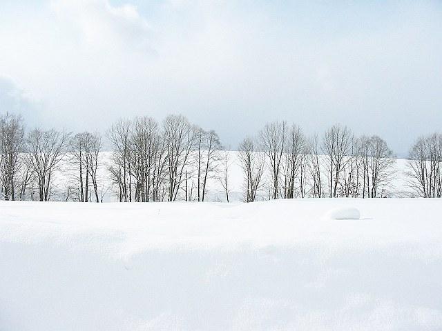 Biei_winter_07