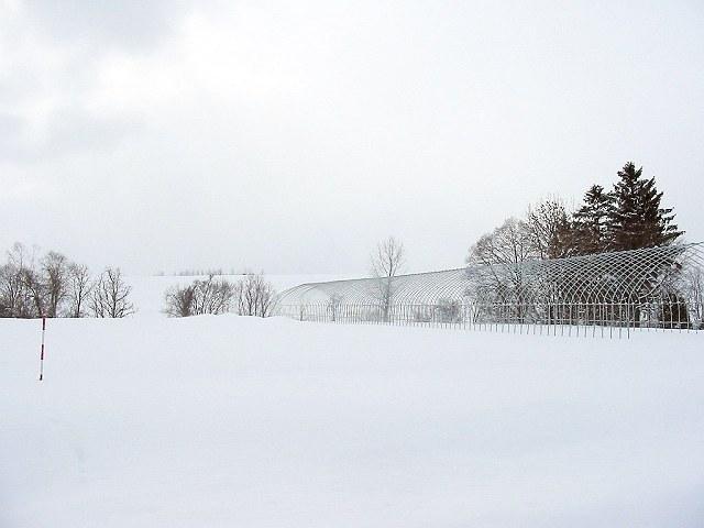 Biei_winter_10