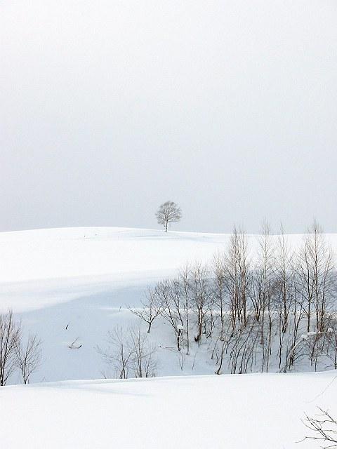 Biei_winter_11
