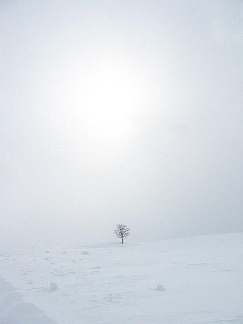 Biei_winter_16