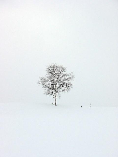 Biei_winter_17