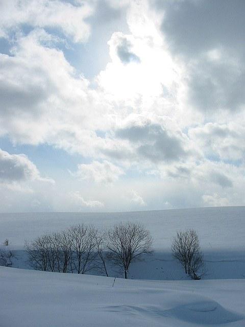 Biei_winter_24