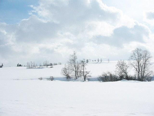 Biei_winter_27