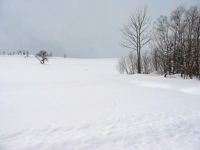 Biei_winter_32