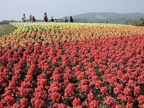 Awajishima_201404_15