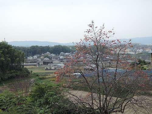 Umami_hills_park_105
