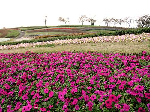 Umami_hills_park_107
