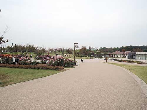 Umami_hills_park_109