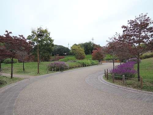 Umami_hills_park_112