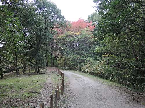 Umami_hills_park_312