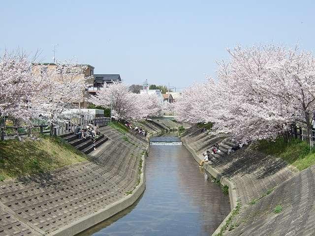 Tatsutagawa_sakura_11