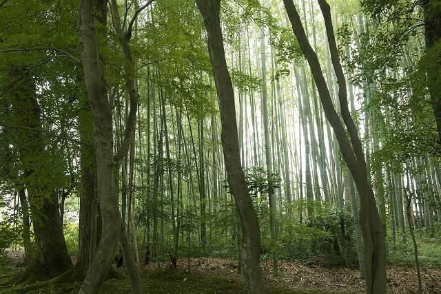Arashiyama2005_024