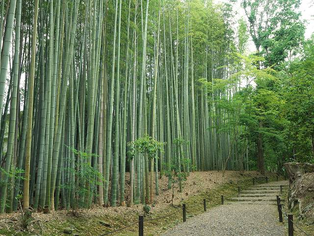 Arashiyama2005_026