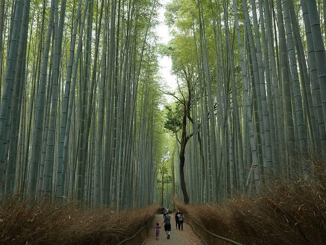 Arashiyama2005_065
