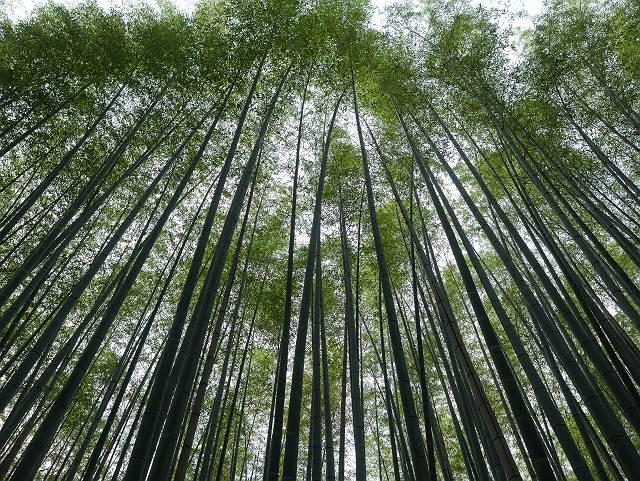 Arashiyama2005_066