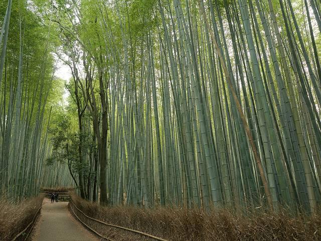 Arashiyama2005_067
