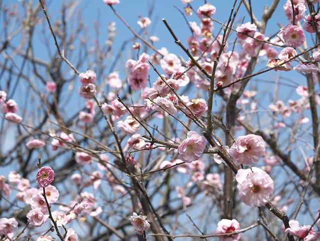 Flower_2103_06