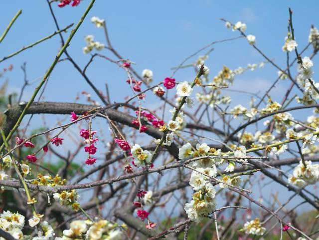 Flower_2103_09
