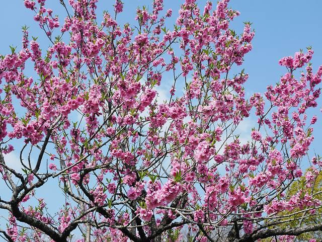 Flower_2103_10