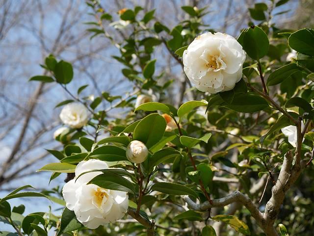 Flower_2103_17