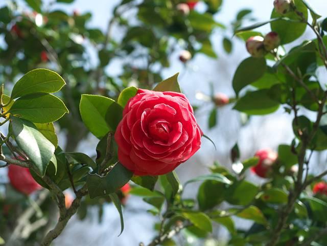 Flower_2103_18