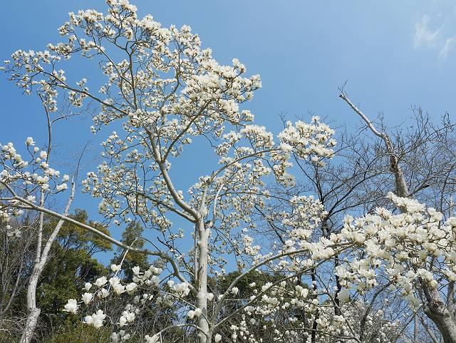 Flower_2103_19