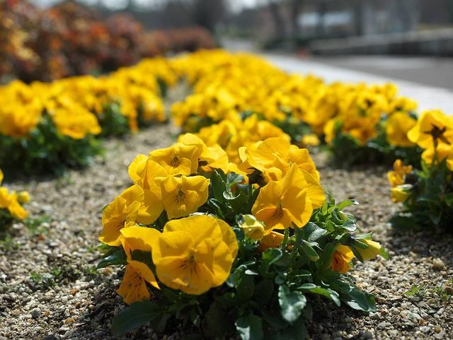 Flower_2103_25