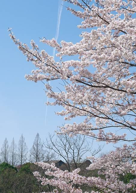 Flower_2103_33