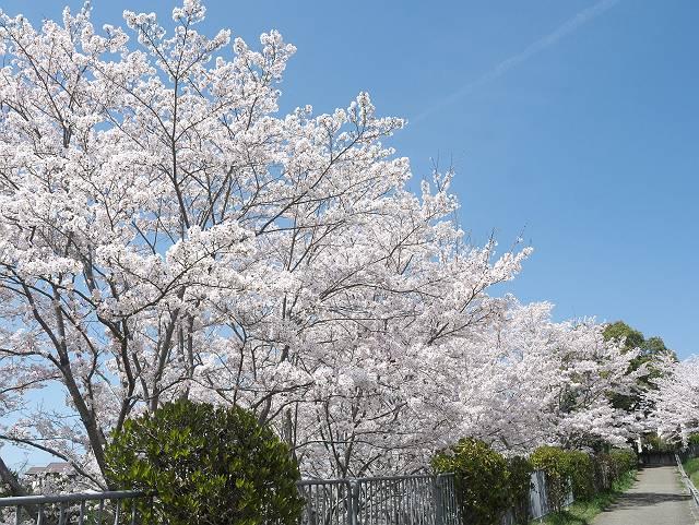 Flower_2103_34