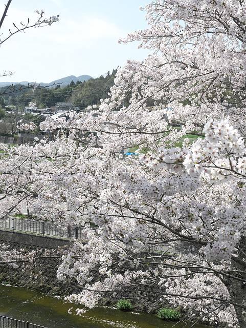 Flower_2103_37
