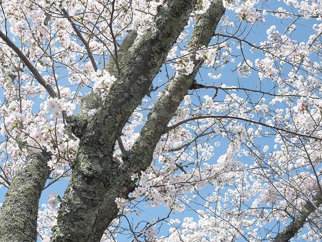 Flower_2103_38