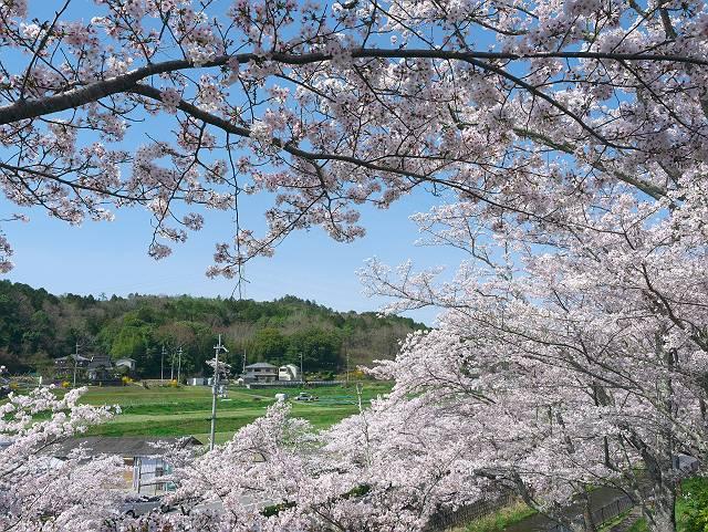 Flower_2103_39