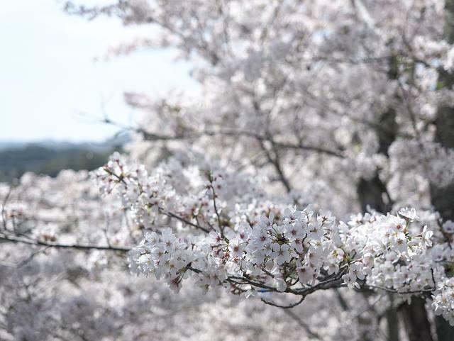 Flower_2103_41