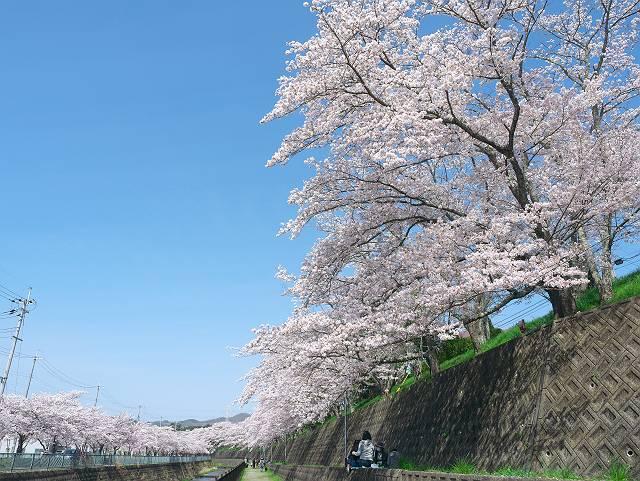 Flower_2103_42