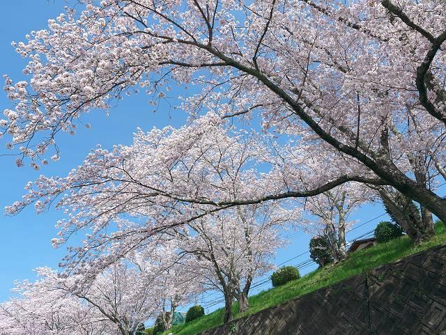 Flower_2103_44