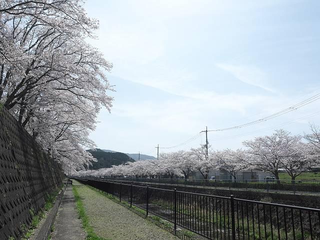 Flower_2103_45